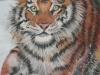 Tiger in the Snow - Pastel Painting by Lisa Young