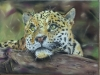 Pastel Painting of Leopard