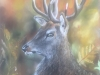 Pastel of White Tail Deer