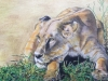 Colored Pencil Drawing, Mary Adult Student