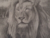 Lion by Ananya