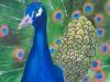 Peacock by Ananya