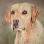 Pastel Portraits – grades 6 to 12