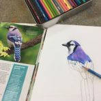 Colored Pencils – Grades 4 to 8