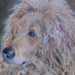 Pastel Portrait of Oban
